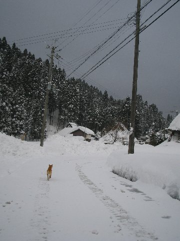 20110110_001_019