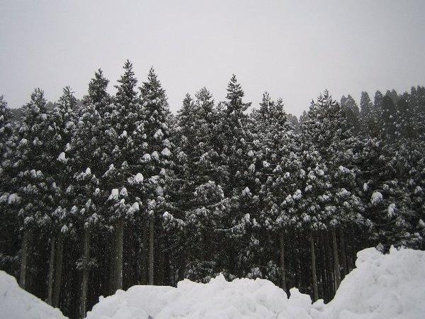 20110110_001_028
